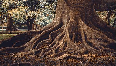 root of trust min